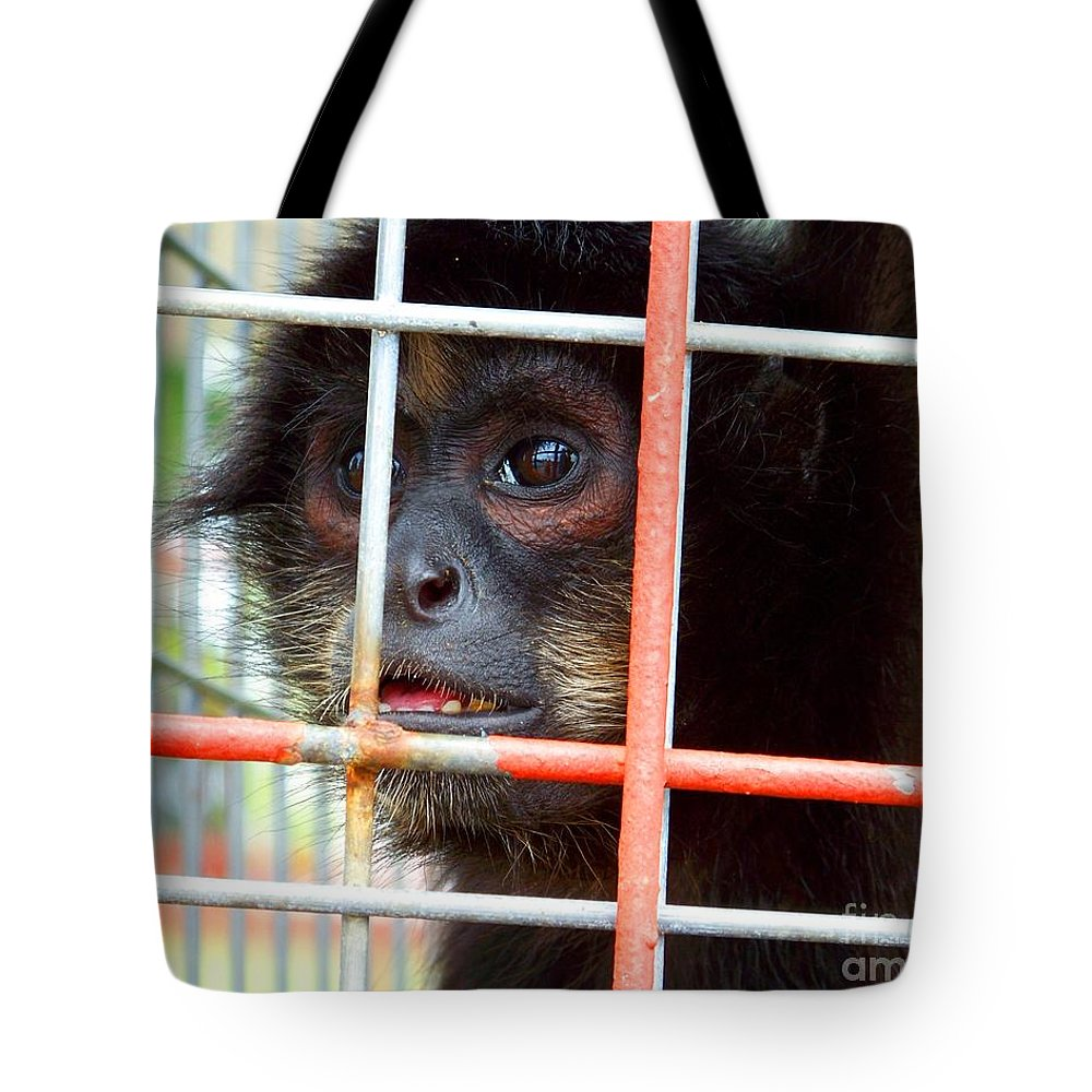 Monkey Tote Bag featuring the photograph Longing by Jai Johnson