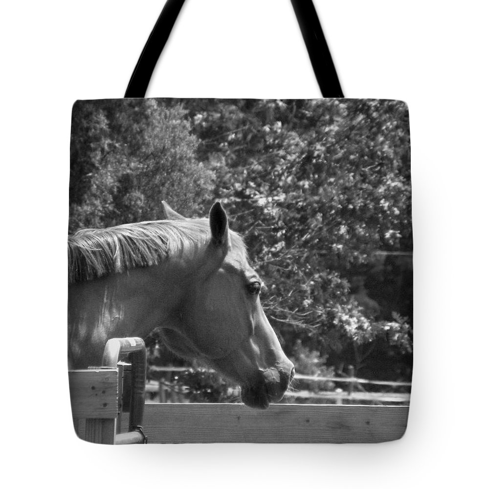 Horse Tote Bag featuring the photograph Longing by Sandi OReilly