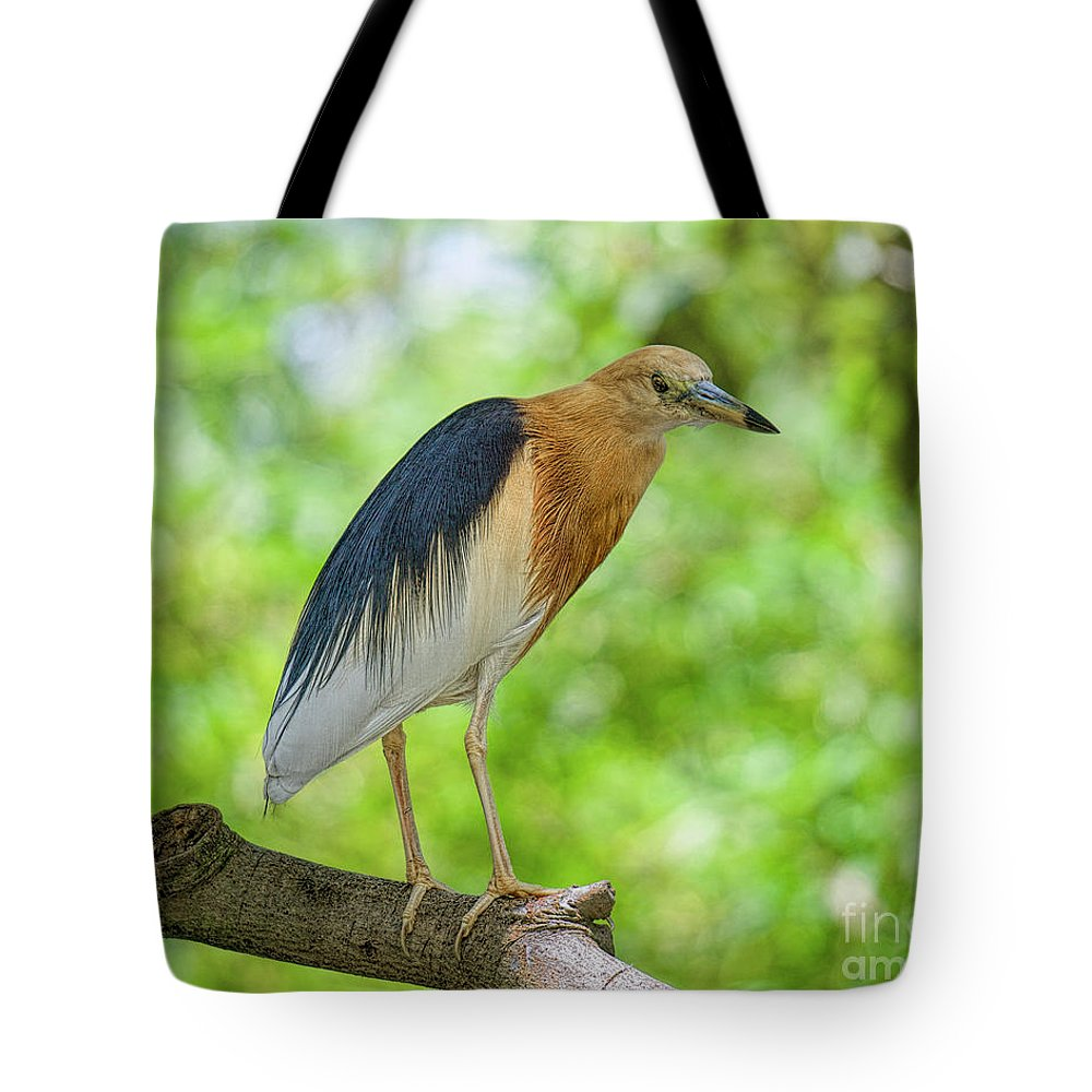 Asian Birds Tote Bag featuring the photograph Looking At You by Judy Kay