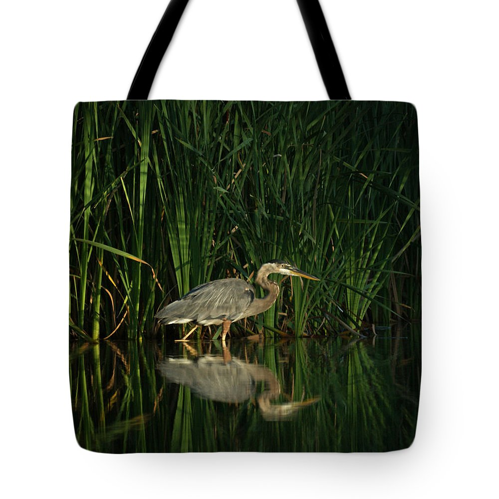 Animals Tote Bag featuring the photograph Looking For Breakfast by Ernie Echols
