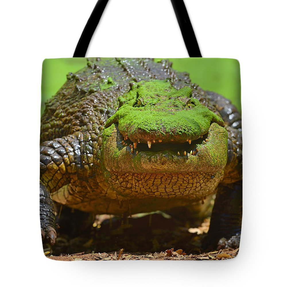 Crocodylus Niloticus Tote Bag featuring the photograph Looking For Lunch by Tony Beck