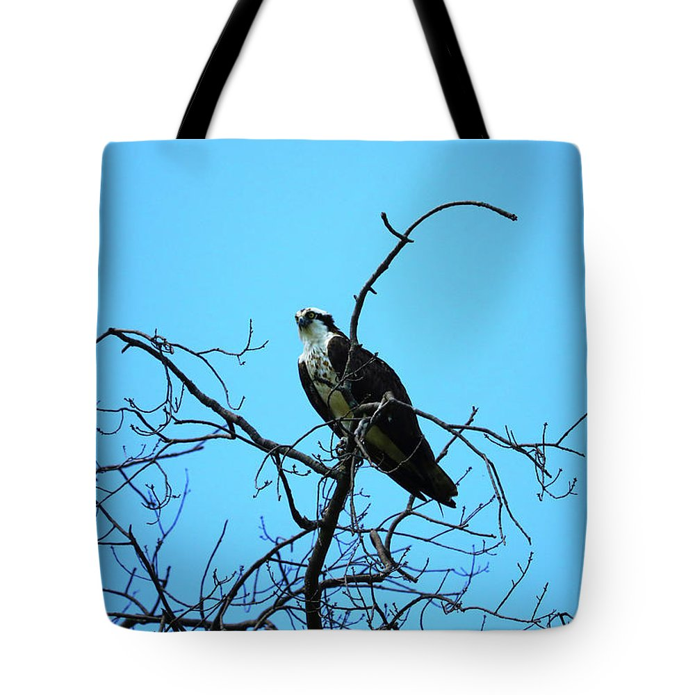 Tote Bag featuring the photograph Looking Out For Lunch by Tony Umana
