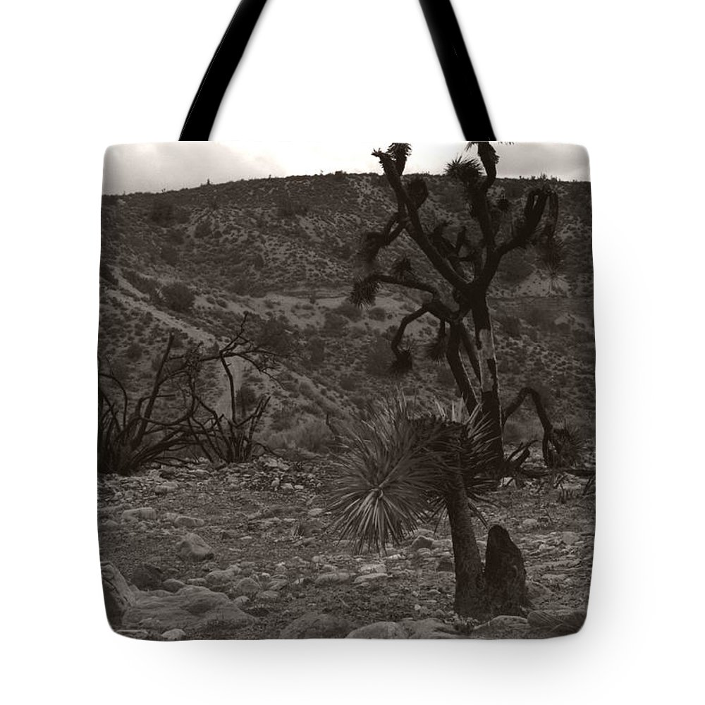 Tote Bag featuring the photograph Looking To The Earth by Heather Kirk