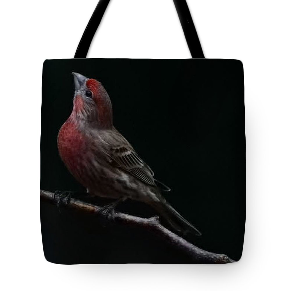 Finch Tote Bag featuring the photograph Looking Towards Heaven by Gaby Swanson