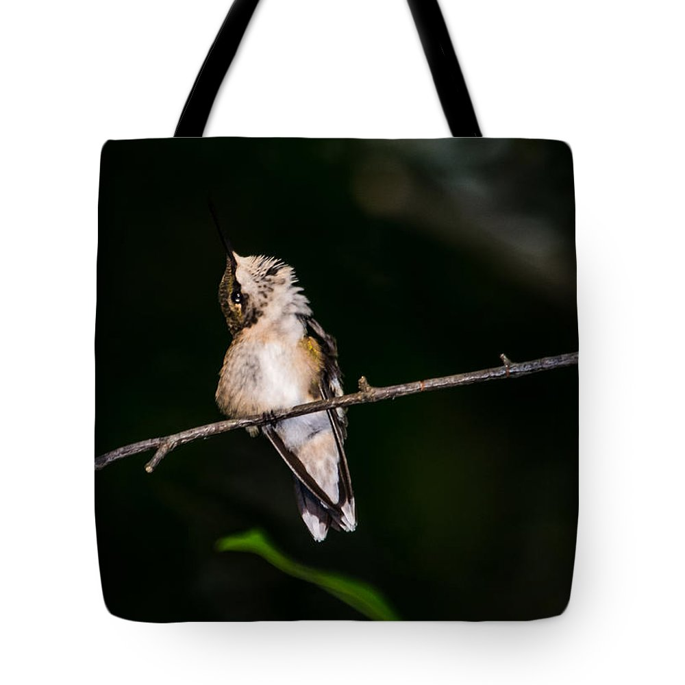 Bird Tote Bag featuring the photograph Looking Up - Hummingbird by Alicia Collins