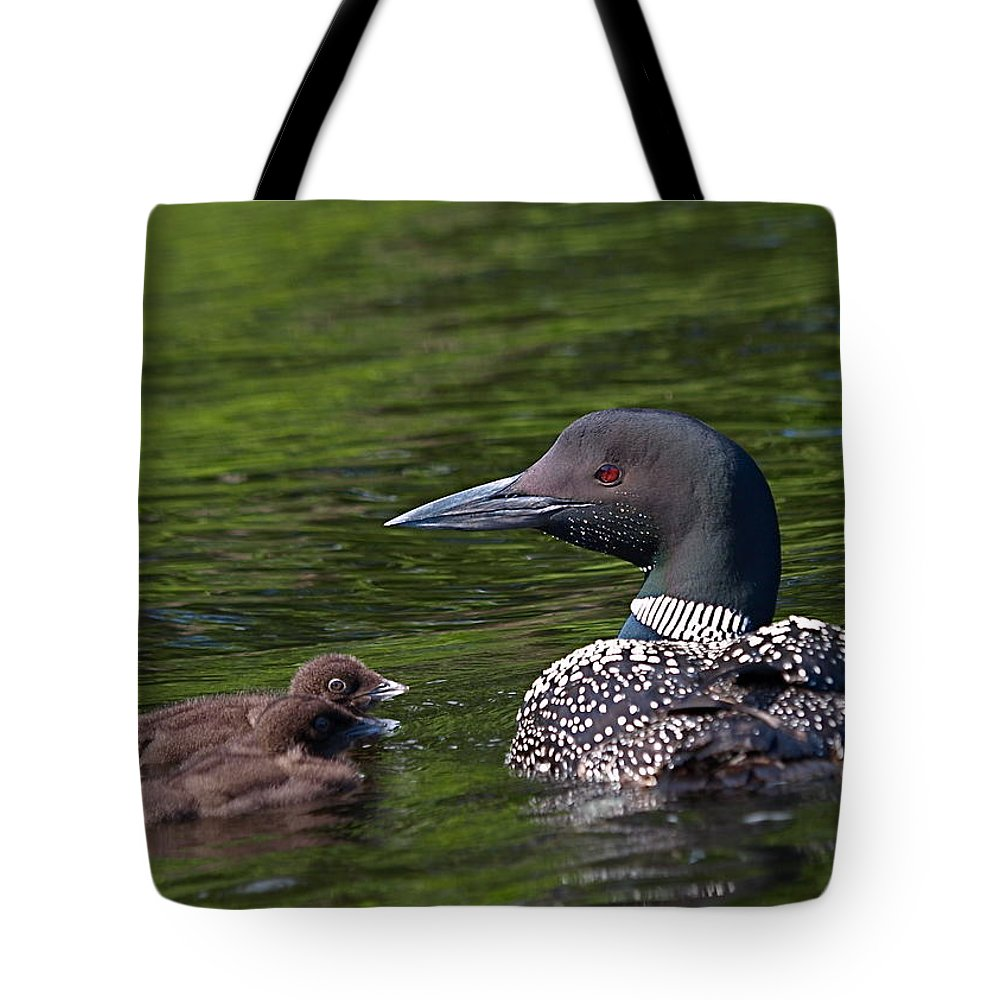 Loon Tote Bag featuring the photograph Loon Afternoon by Peter Gray