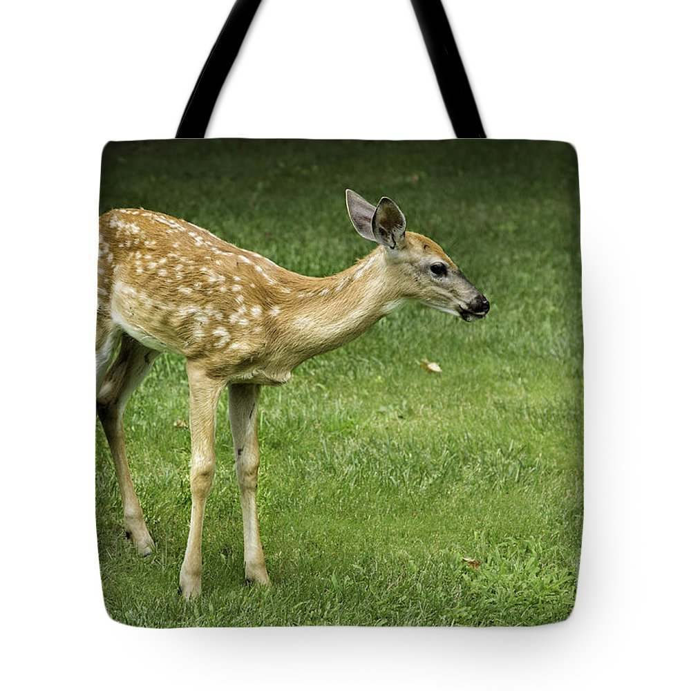 Animals Tote Bag featuring the photograph Lost Fawn by Timothy Hacker