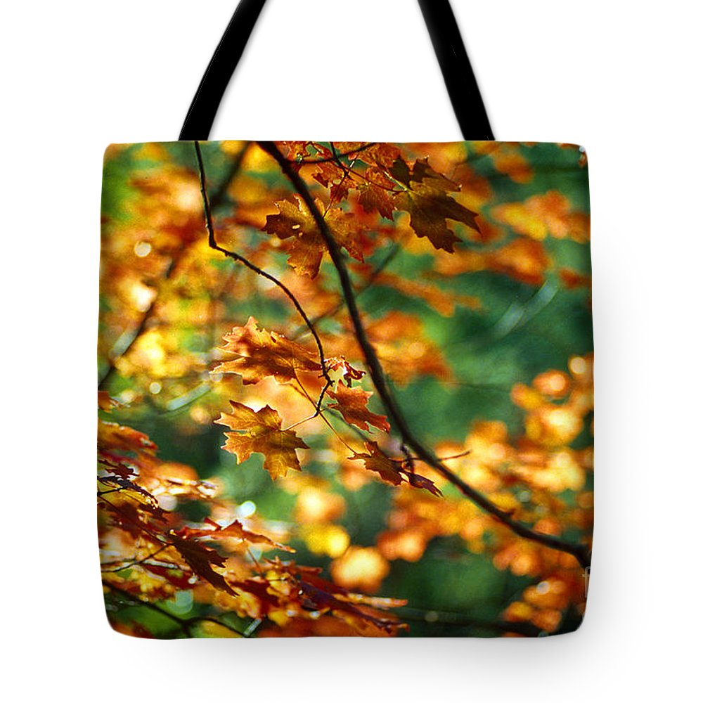 Fall Color Tote Bag featuring the photograph Lost In Leaves by Kathy McClure