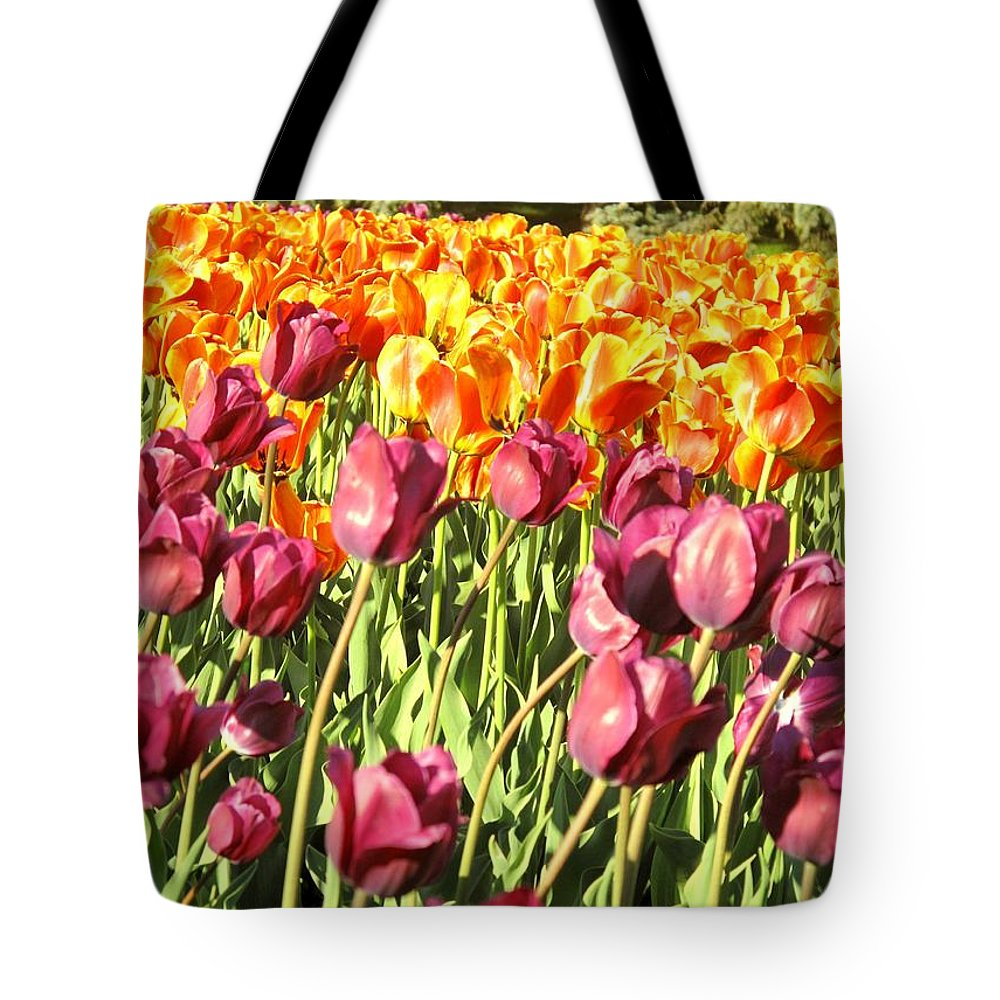 Tulips Tote Bag featuring the photograph Lots Of Tulips by Ian MacDonald