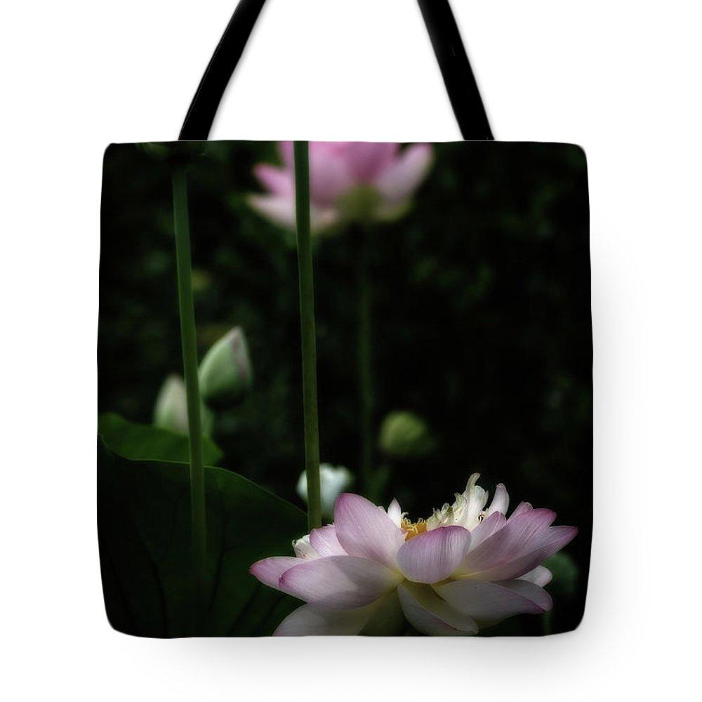 Designs Similar to Lotus Blossoms