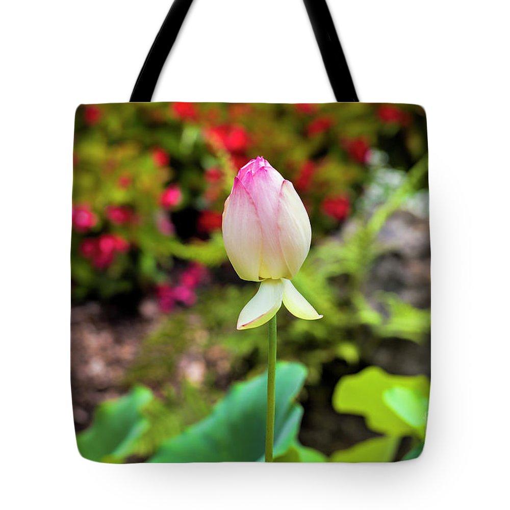 Lotus flower tote bag for sale by felix lai lotus flower tote bag featuring the photograph lotus flower by felix lai izmirmasajfo