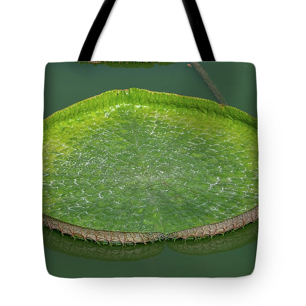 Leaf Tote Bag featuring the photograph Lotus Leaf In The Marsh by Que Siam