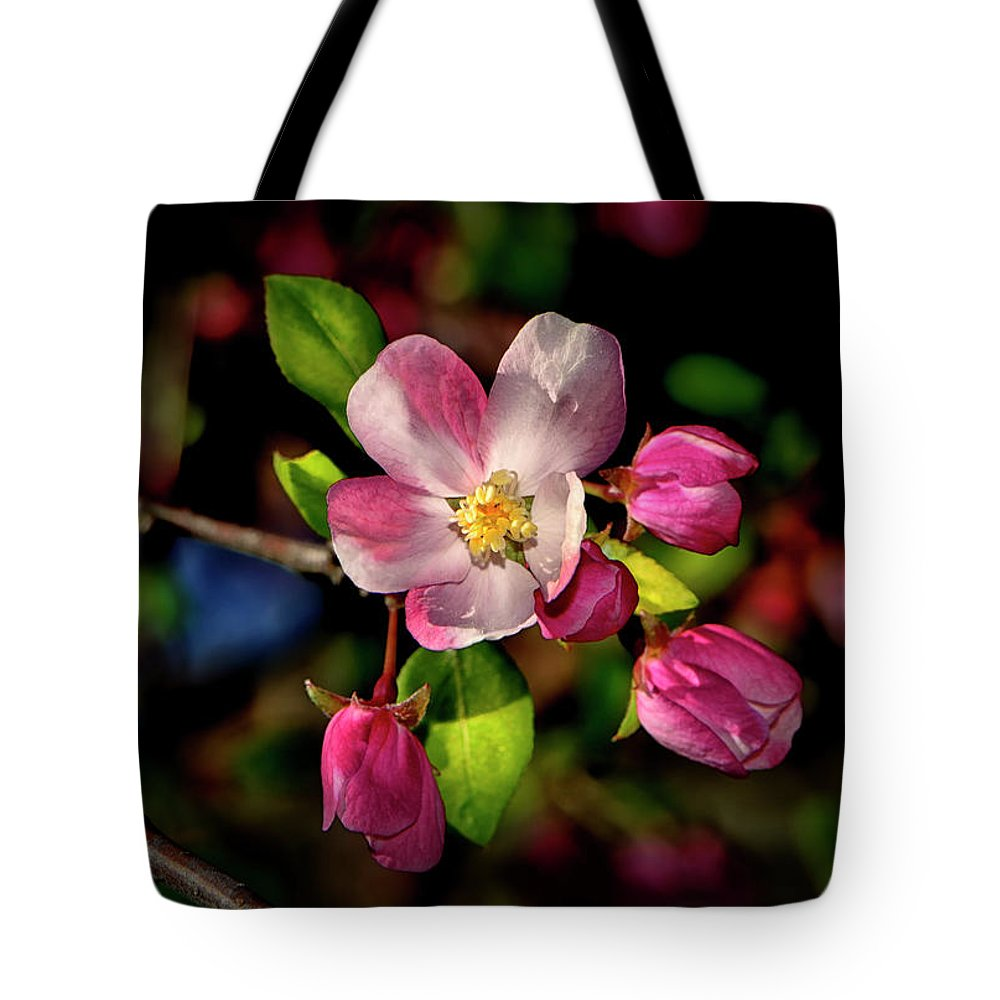 Apple Blossom Tote Bag featuring the photograph Louisa Apple Blossom 001 by George Bostian