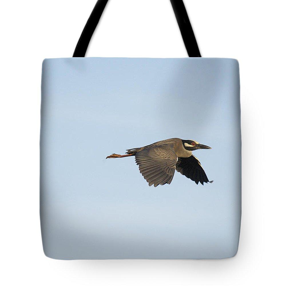 Louisiana Tote Bag featuring the photograph Louisiana Green Heron by Robert Ponzoni