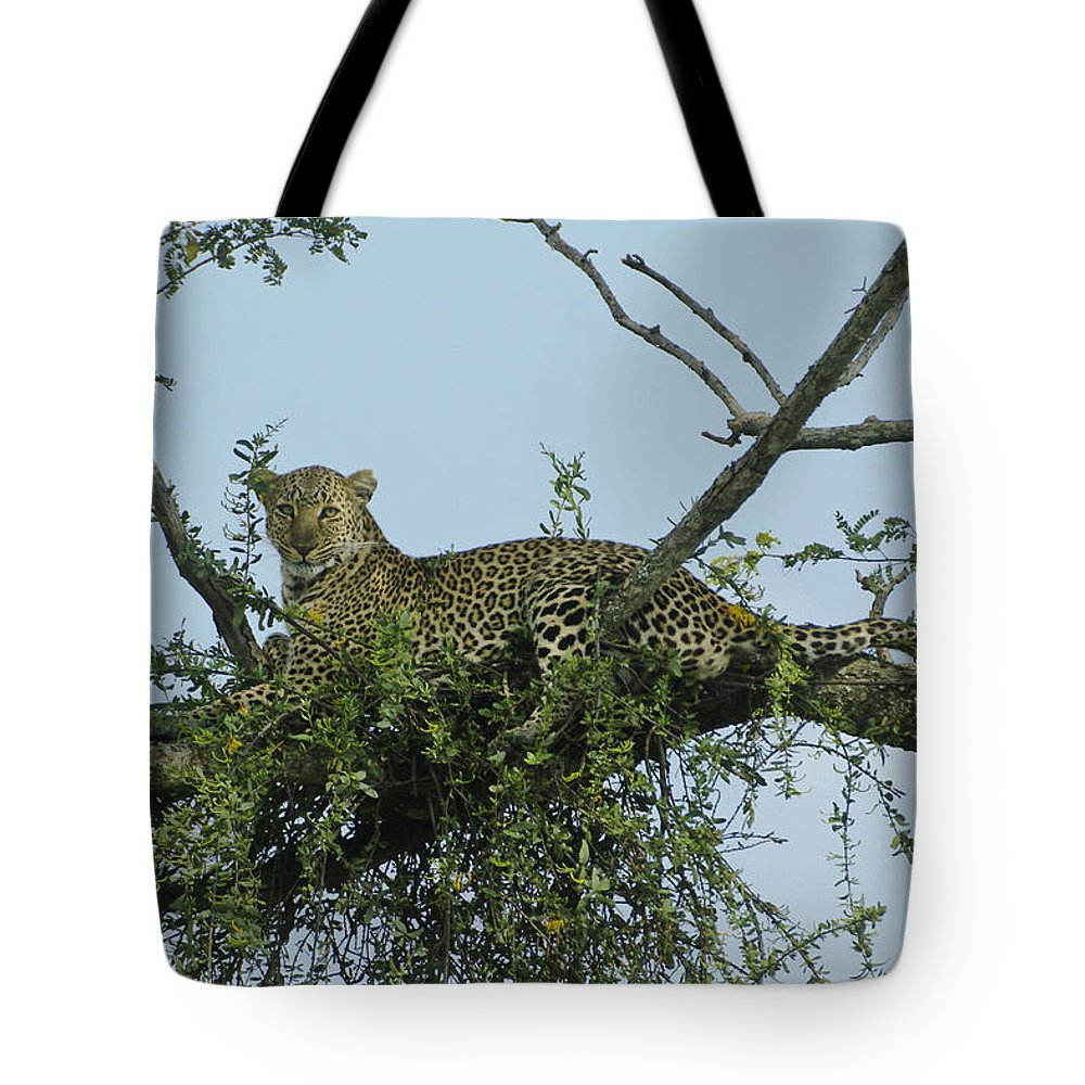 Africa Tote Bag featuring the photograph Lounging Leopard by Michele Burgess