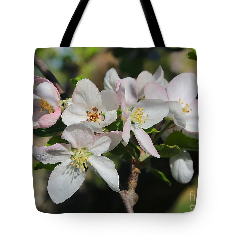 Apple Blossoms Tote Bag featuring the photograph Lovely Apple Blossoms by Carol Groenen