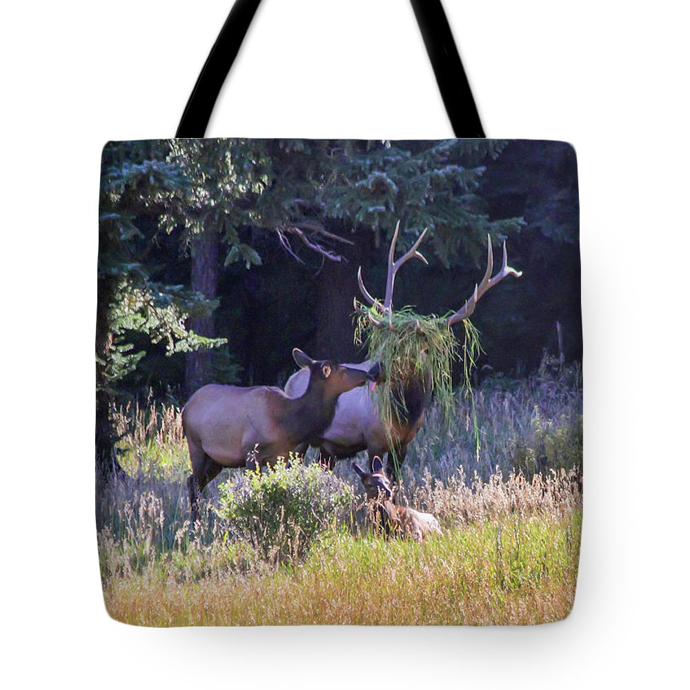Elk Tote Bag featuring the photograph Loving The New Hairdo by Shane Bechler