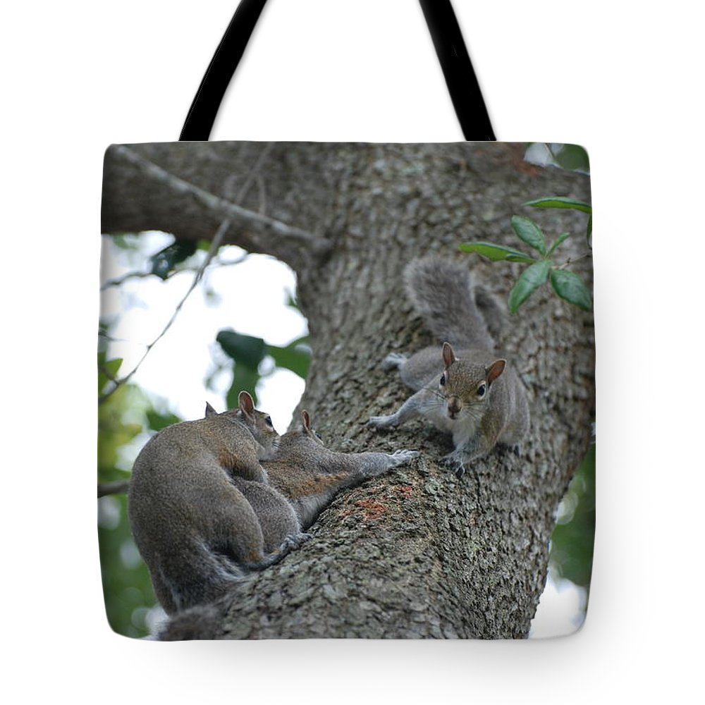 Squirrel Tote Bag featuring the photograph Luck Be A Lady by Rob Hans