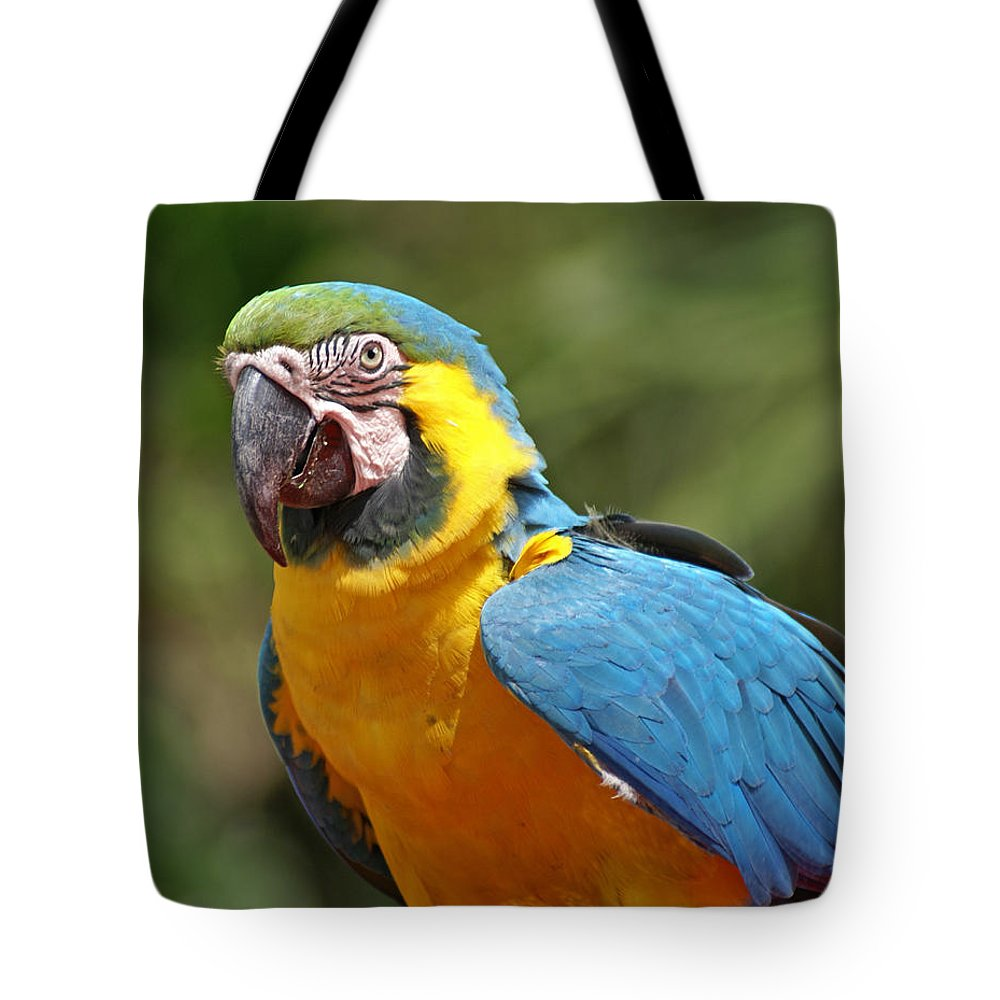 Parrot Tote Bag featuring the photograph Macaw by Heather Coen
