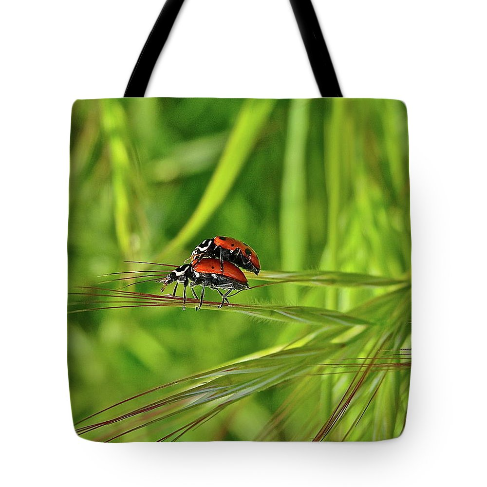 Insects Tote Bag featuring the photograph Macro Acrobats by Diana Hatcher