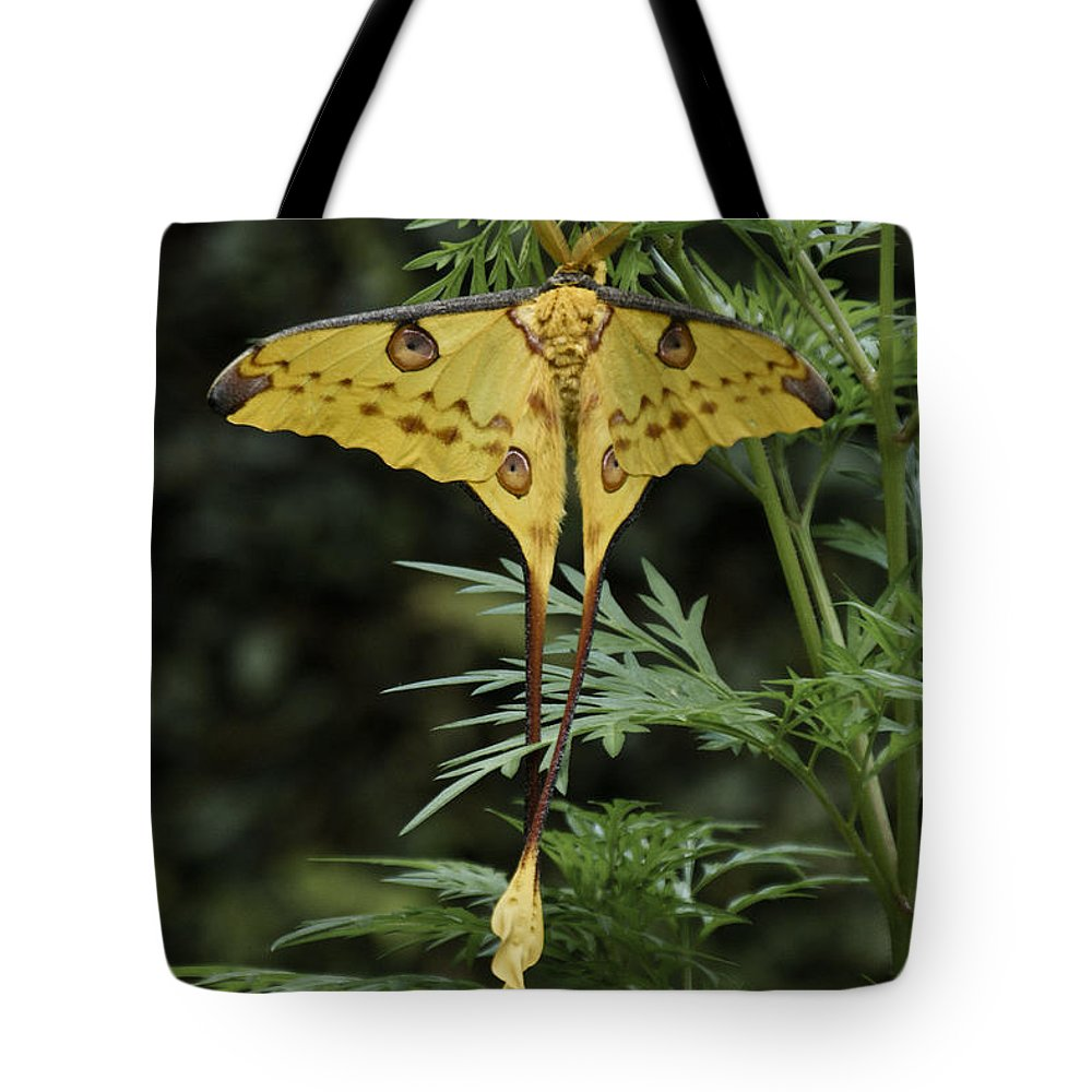 Madagascar Tote Bag featuring the photograph Madagascar Comet Moth by Michele Burgess