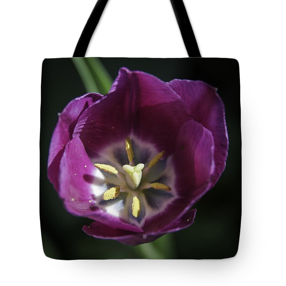 Flowers Tote Bag featuring the photograph Magenta Tulip Center Squared by Teresa Mucha