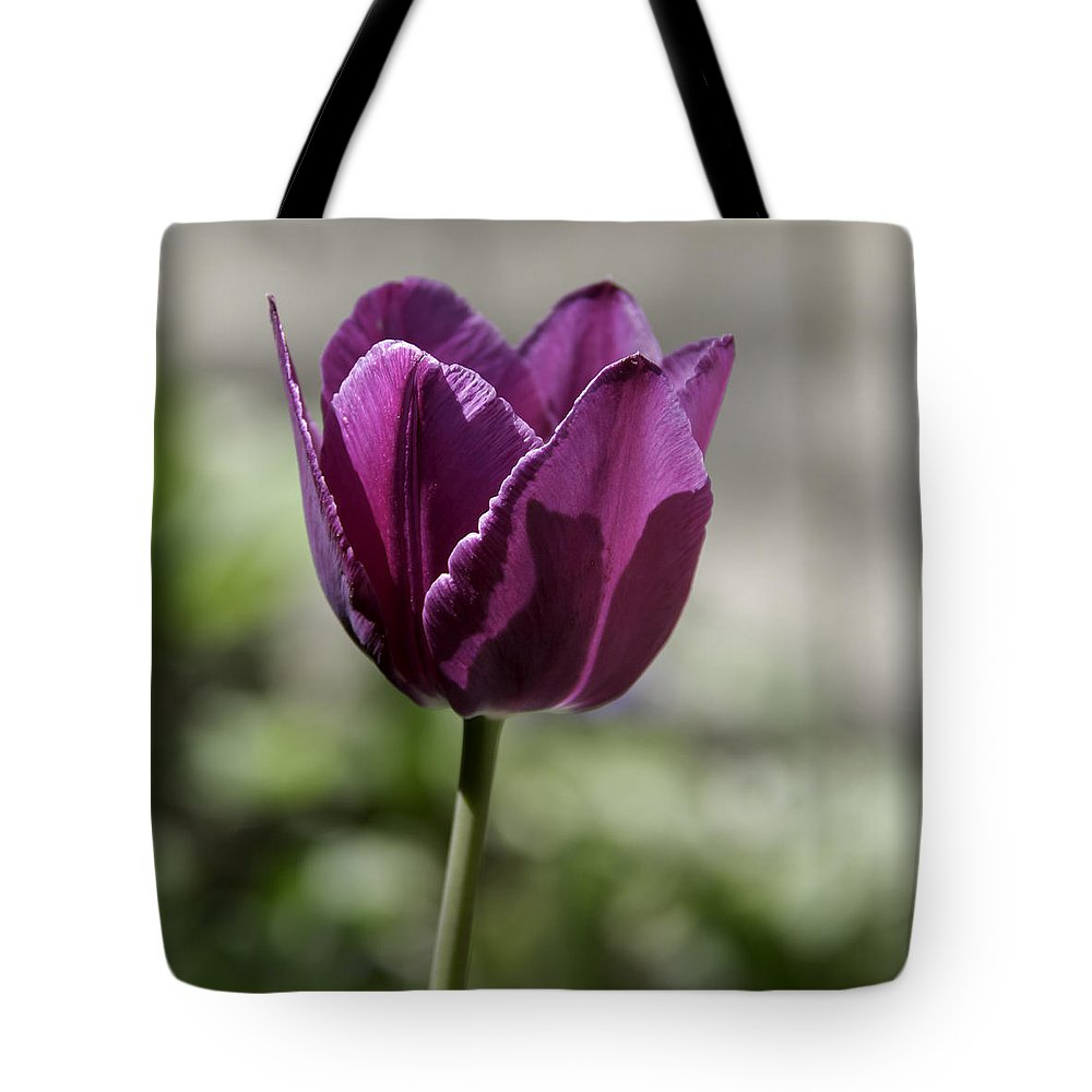 Flowers Tote Bag featuring the photograph Magenta Tulip Squared by Teresa Mucha