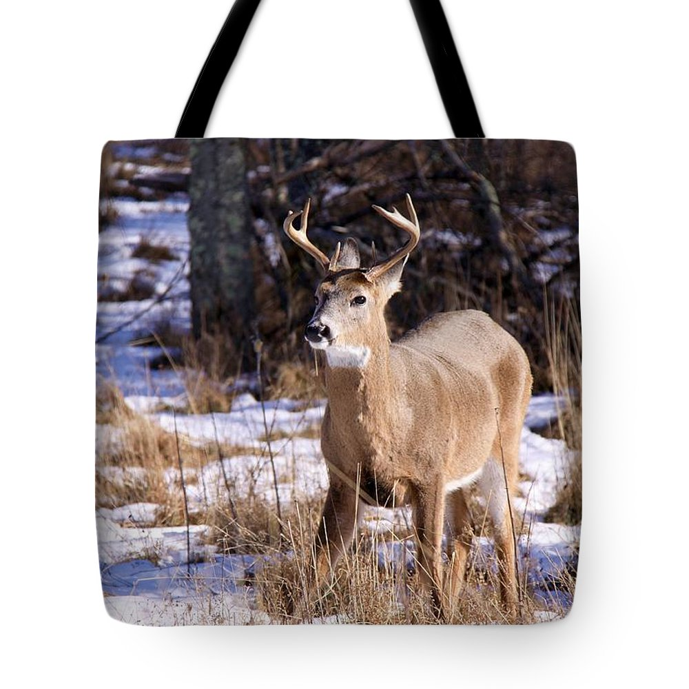 Deer Tote Bag featuring the photograph Magic Reindeer by Mitch Cat