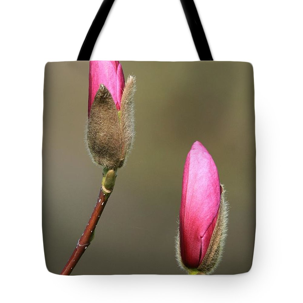 Spring Bloom Magnolia Pink Blossom Tote Bag featuring the photograph Magnbolia Bloom by Winston Rockwell