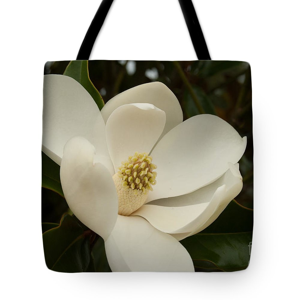 Flower Tote Bag featuring the photograph Southern Magnolia Bloom by Pamela Williams