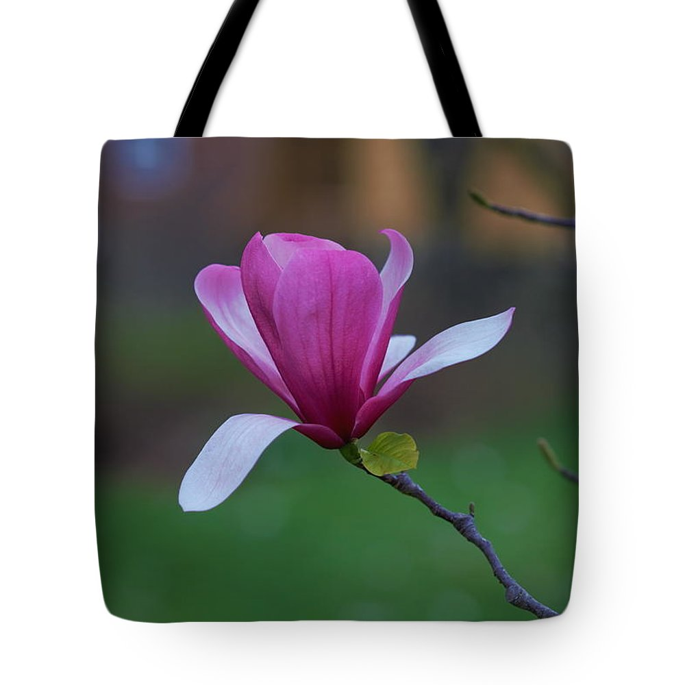 Magnolia Tote Bag featuring the photograph Magnolia Blossom by Carrie Goeringer
