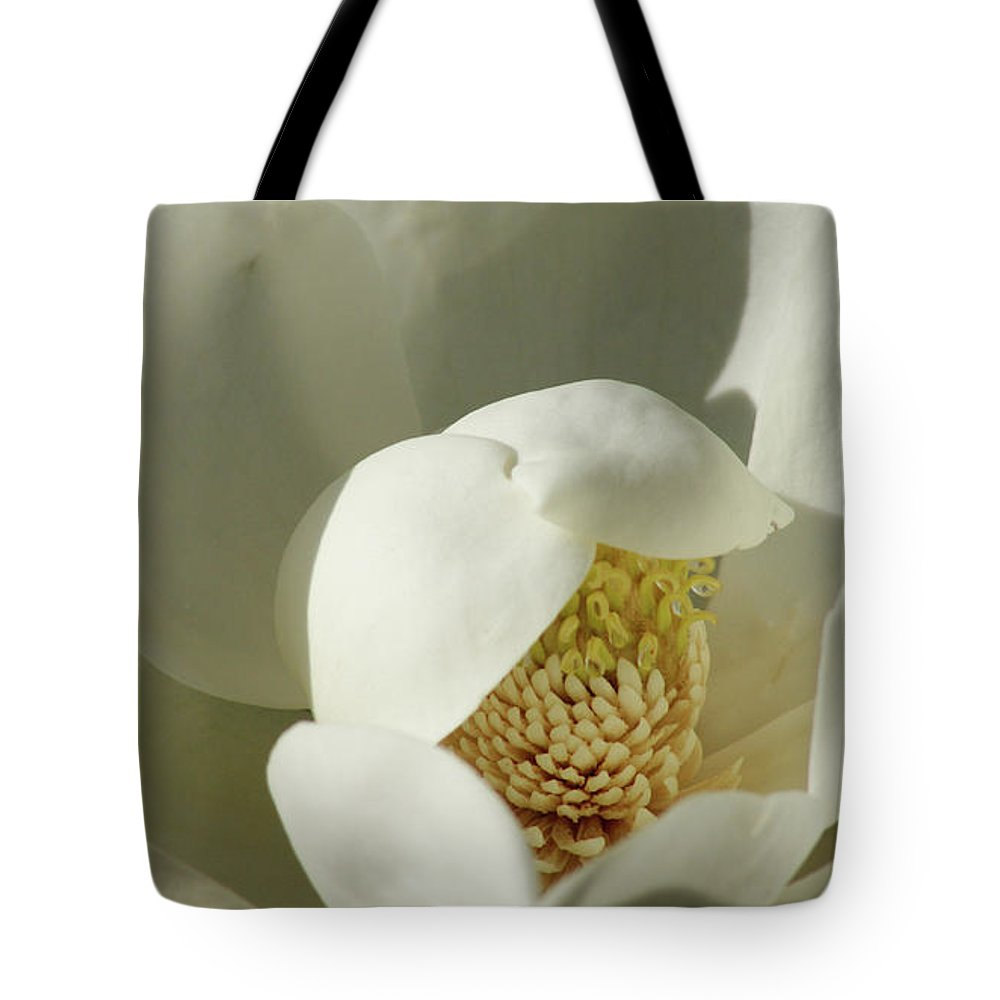 Flower Tote Bag featuring the photograph Magnolia by Cathi Abbiss Crane