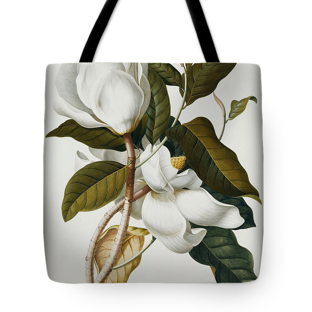 Magnolia Tote Bag featuring the painting Magnolia by Georg Dionysius Ehret