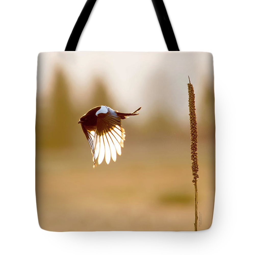 Magpie Tote Bag featuring the photograph Magpie Wings Of Light by Judi Dressler
