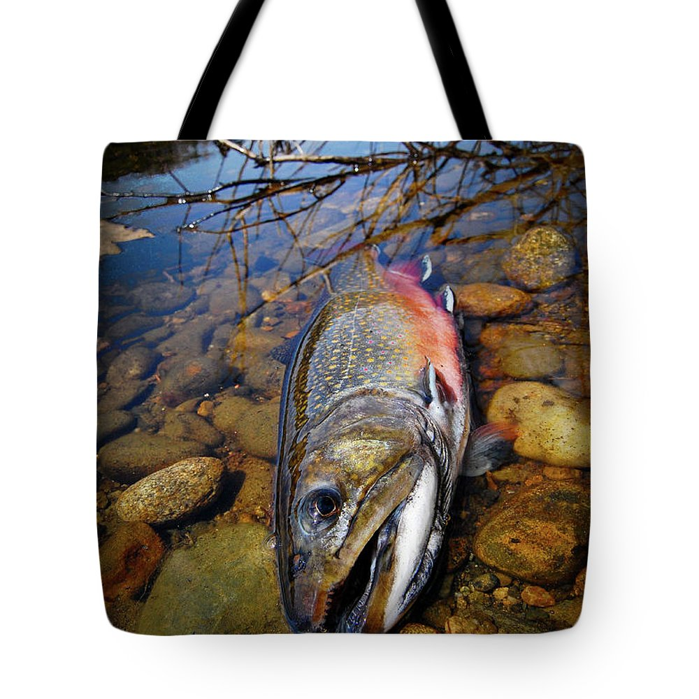 Maine Tote Bag featuring the photograph Maine Brookie by Kevin Couture