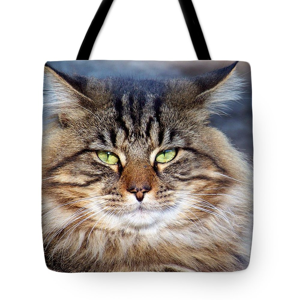 Cat Tote Bag featuring the photograph Maine Coon I by Jai Johnson