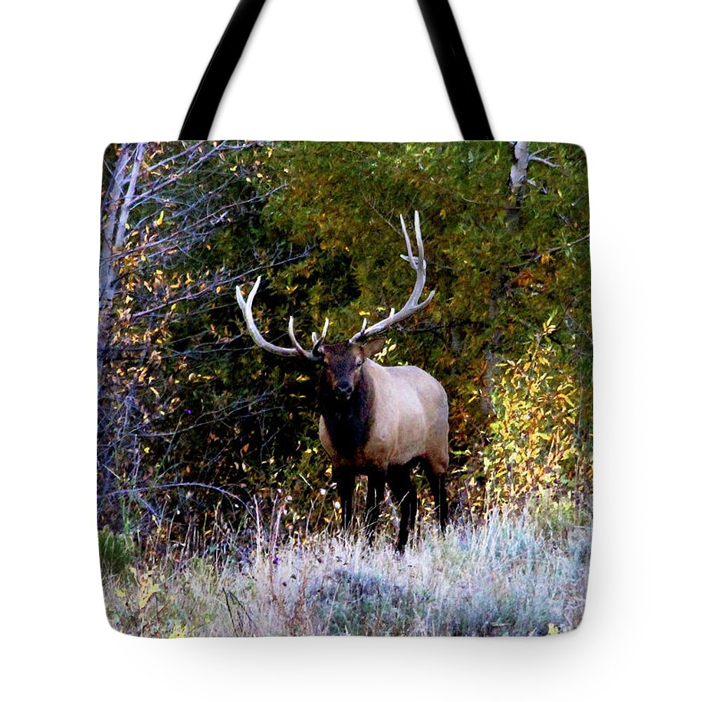 Elk Tote Bag featuring the photograph Majestic Bull Elk Survivor In Colorado by Dale Jackson