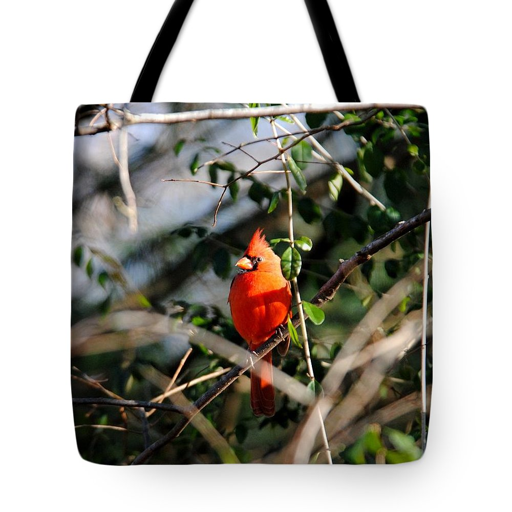Cardinal Tote Bag featuring the photograph Male Cardinal II by Jai Johnson