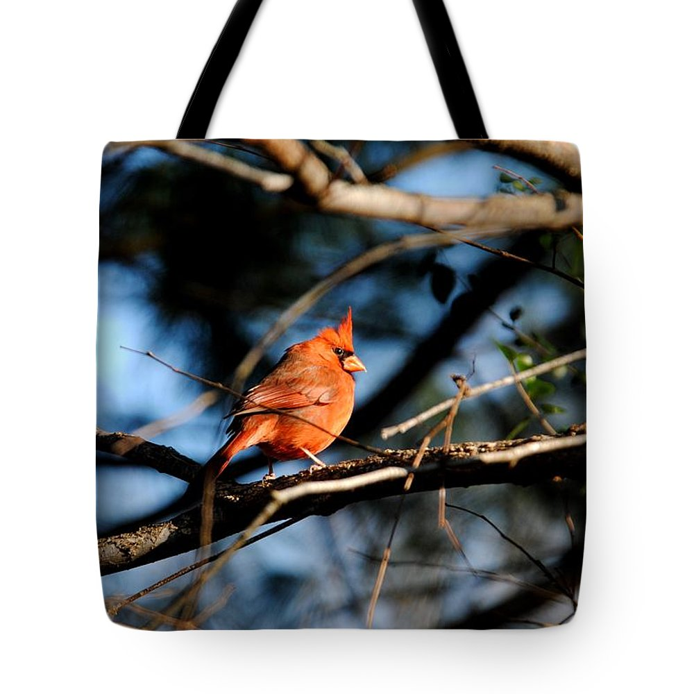 Cardinal Tote Bag featuring the photograph Male Cardinal IIi by Jai Johnson