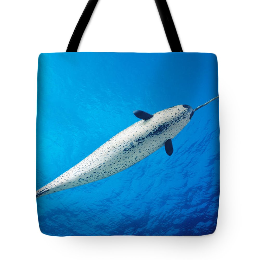 Aquatic Tote Bag featuring the photograph Male Narwhal by Dave Fleetham - Printscapes
