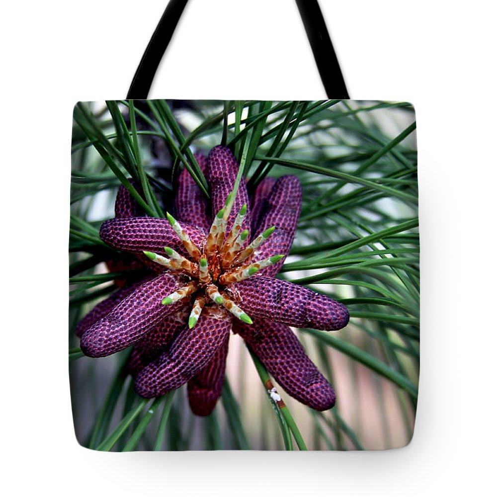 Pine Tote Bag featuring the photograph Male Ponderosa Pine Cones by Karon Melillo DeVega
