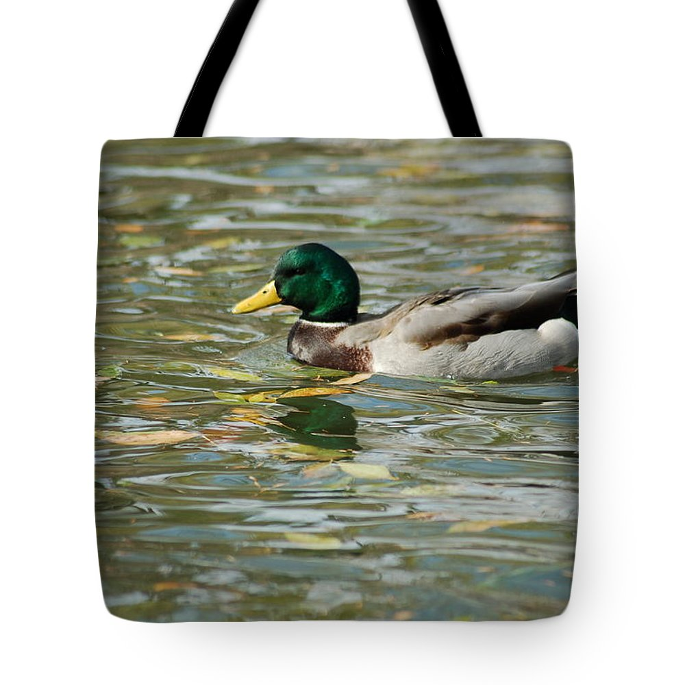 Birds Tote Bag featuring the photograph Mallard Among The Fallen Leaves by D Nigon