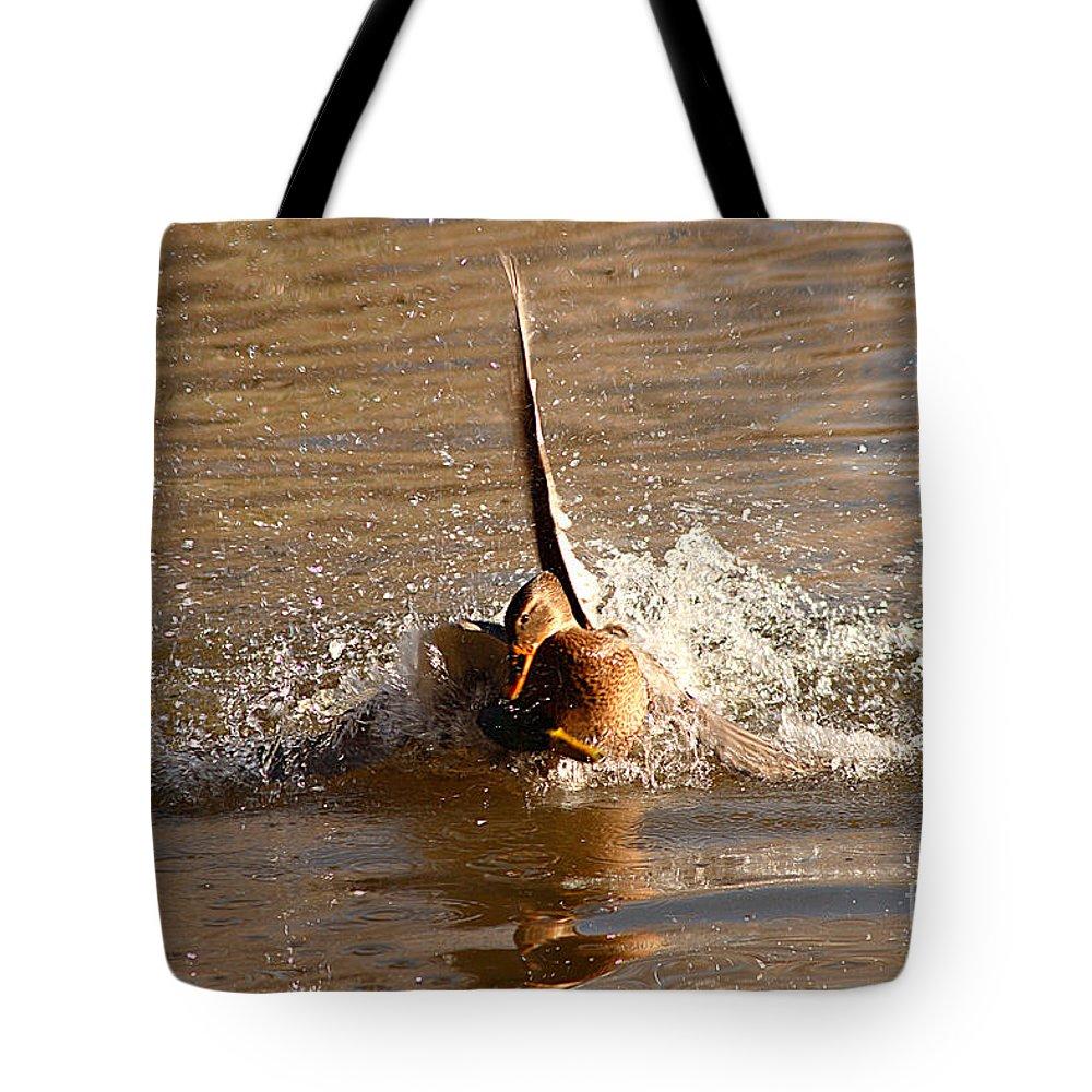 Mallard Tote Bag featuring the photograph Mallard Mating Dance by Max Allen