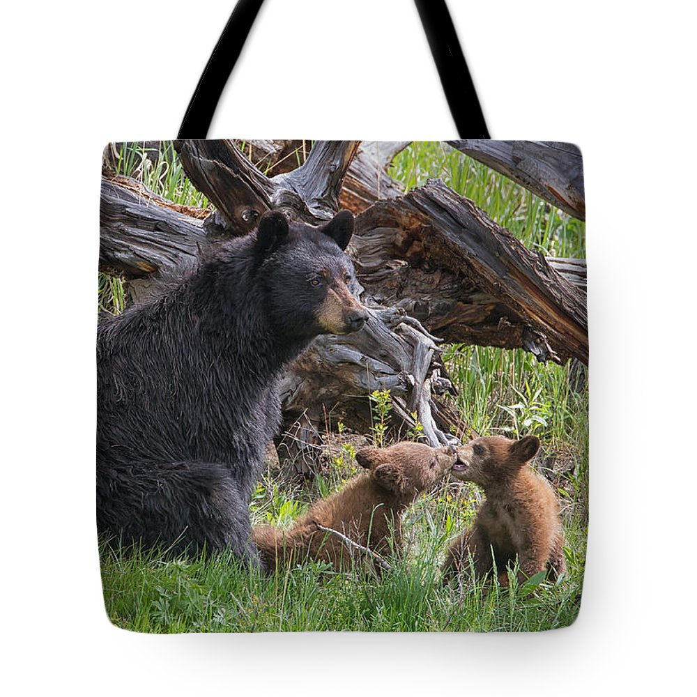 Yellowstone Wildlife Prints Tote Bag featuring the photograph Mama Black Bear With Cinnamon Cubs by Martin Belan
