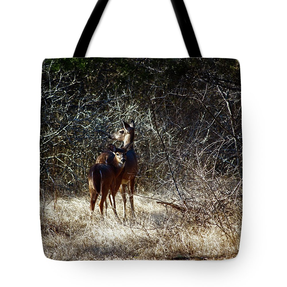 Deer Tote Bag featuring the photograph Mamma's Apron Strings Color by Laura Vilandre