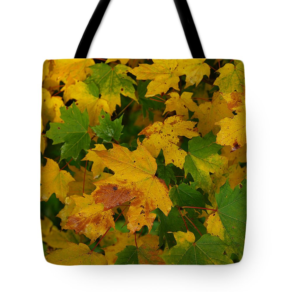 Fall Tote Bag featuring the photograph Mapel Leavs. by Itai Minovitz