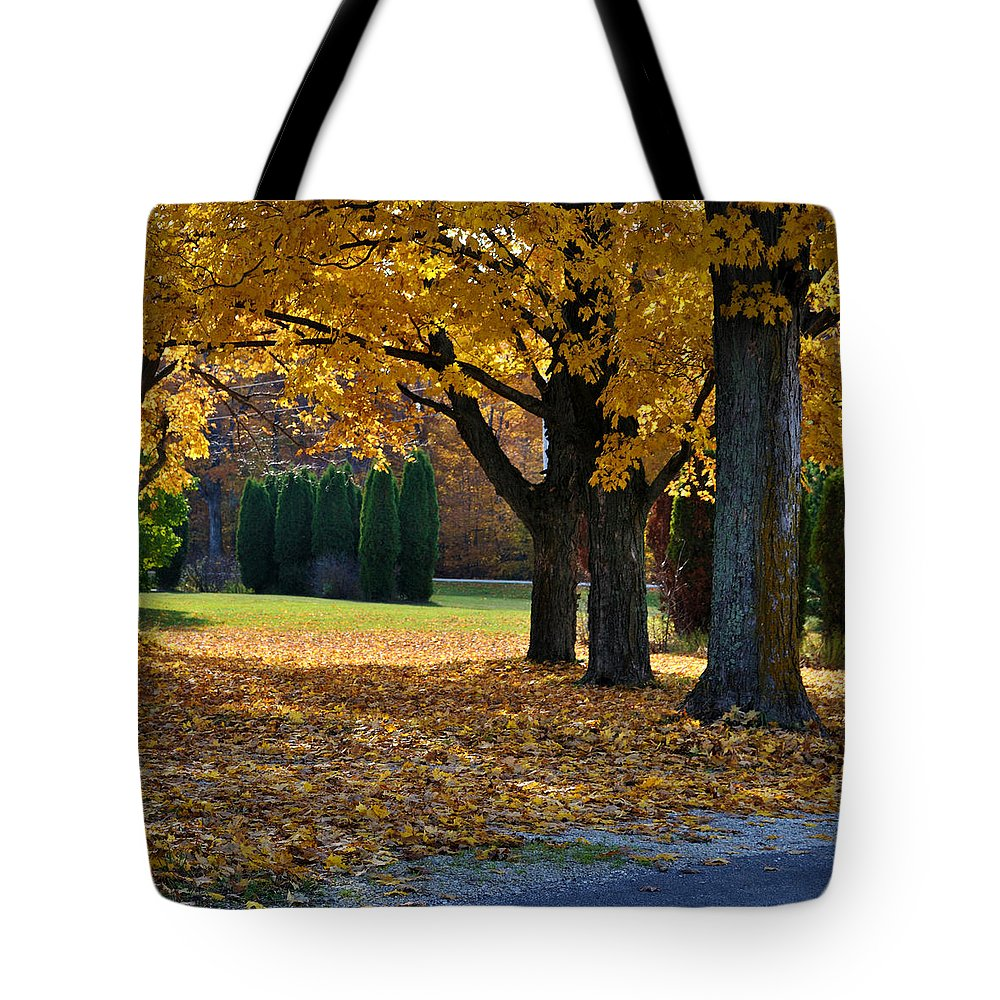 Trees Tote Bag featuring the photograph Maple And Arborvitae by Tim Nyberg
