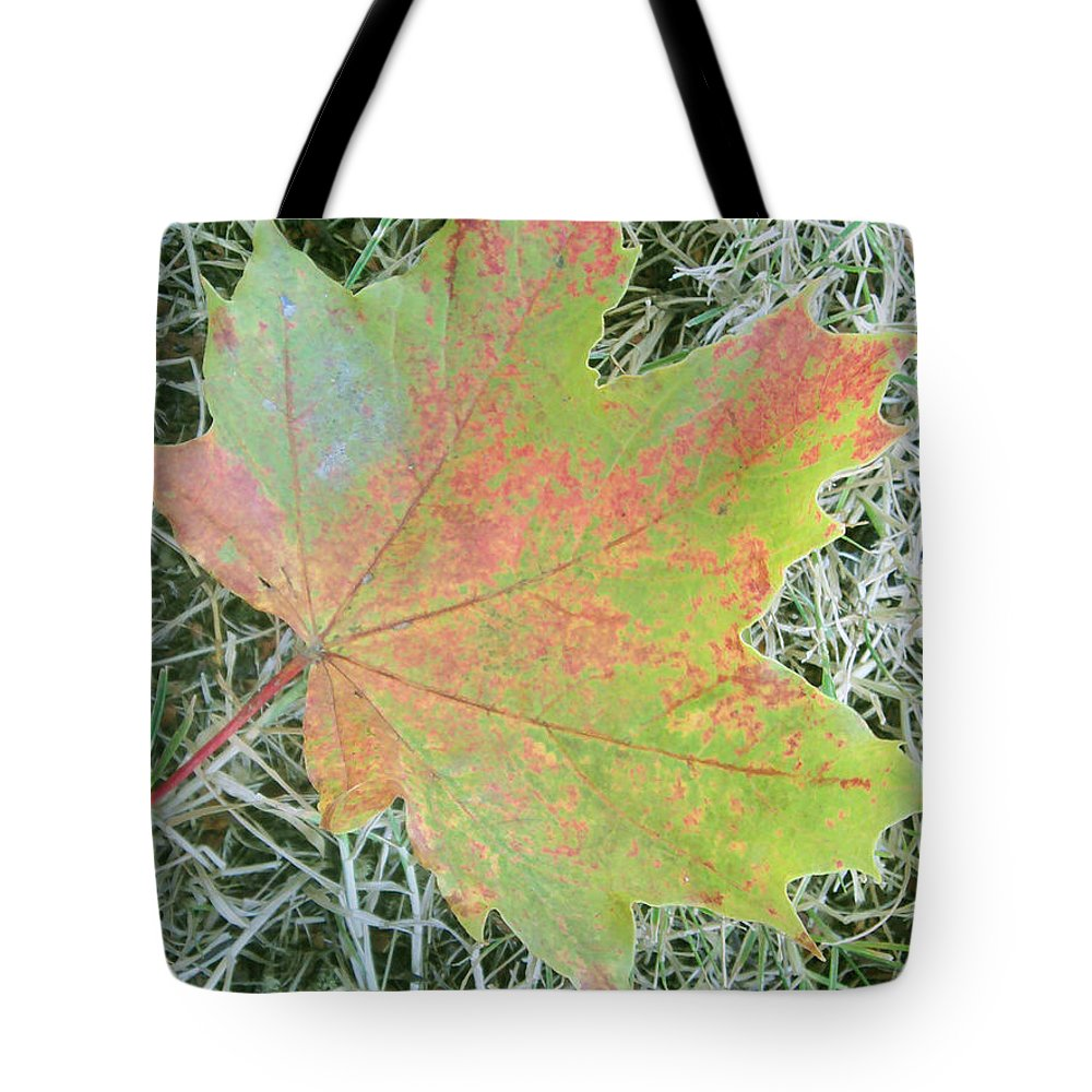 Leaf Tote Bag featuring the photograph Maple Leaf by Luzia Light
