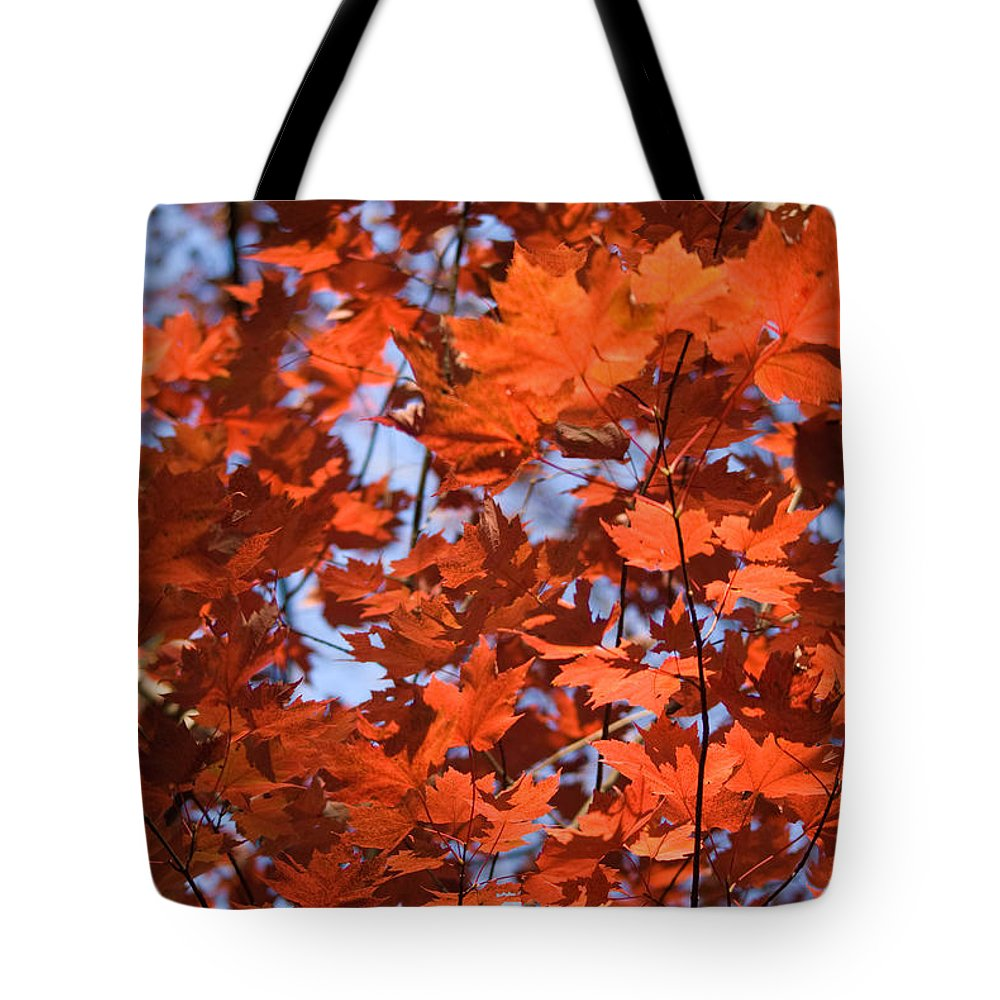 Maple Tote Bag featuring the photograph Maple Leaves Aglow by Douglas Barnett