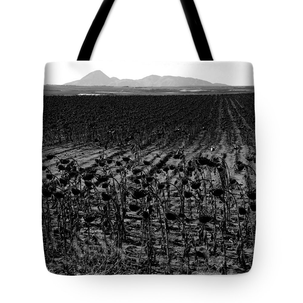 Sunflowers Tote Bag featuring the photograph March Of The Sunflowers by David Lee Thompson